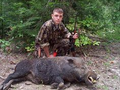 hunting wild boar - Google Search