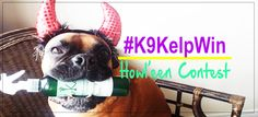 Win Customized Wooden Coins with your dog's photo! #K9KelpWin  #Halloween @K9Kelp #Contest