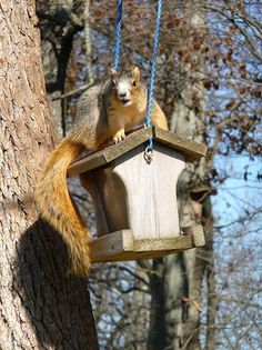 The feeder was for birds, not squirrels. Yet, there he sat, stuck up and daring me to do anything about it. Inspirational Blogs, Stuck Up, Wit And Wisdom, English Idioms, Bird Feeders, Birds, Outdoor Decor, Squirrels, Esl