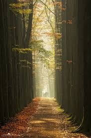 Google Image Result for http://omgamazingpics.com/wp-content/uploads/2013/09/Amazing-Big-Trees-at-Lage-Vuursche-Netherlands.jpg