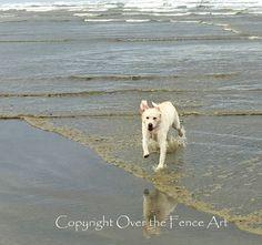 LABRADOR Greeting Card Dog Photography Yellow Labrador Runs on