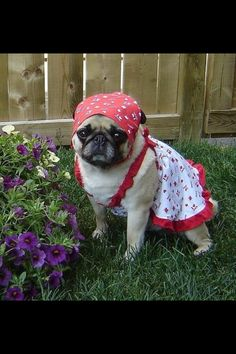 Not China! Just a sweet pug pic from LuLu.