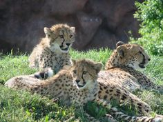 Spots Run in the Family
