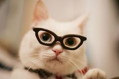 "Best of ""45 Cats Wearing Glasses"""