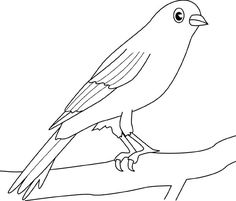 Canary Bird Picture Coloring Pages : Best Place to Color Bird Coloring Pages, Coloring Pages For Kids, Bird Pictures, Colorful Pictures, Canary Birds, Online Coloring, To Color, Diy Projects, Mary
