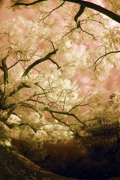 Trees, Sky and Pond in Kamakura #infraredphoto.