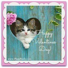 happy valentines day zee tv