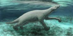 Ceri Thomas - Thalassocnus, a giant marine sloth that lived in coastal Peru between 10 and 2 million years ago