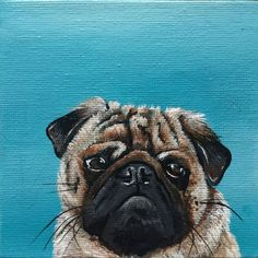 """""""Pug on turquoise (miniature)"""" by Karen Elaine  Evans. Acrylic painting on Canvas, Subject: Animals and birds, Photorealistic style, One of a kind artwork, Signed certificate of authenticity, This artwork is sold framed, Size: 13 x 13 x 2 cm (framed), 5.12 x 5.12 x 0.79 in (framed), Materials: Acrylic and varnish on canvas board"""
