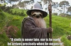 A sloth is never late�                                                                                                                                                     I live on sloth time!