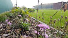 Rodinná záhrada Dobrohošť. Plants, Plant, Planets