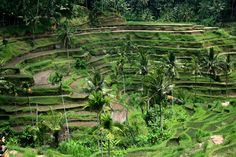 Experience Bali