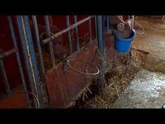 Bondgården - YouTube Youtube, The Originals, Animales, Youtubers, Youtube Movies