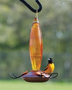 attract the orioles to your yard and keep them coming back