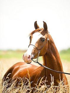 Horse (SarahDickersonPhoto)