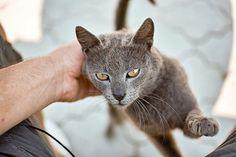 Bokeh, F1, Wordpress, Animals, Blog, Pictures, Animales, Animaux, Animal
