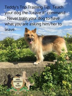 Teddy's Top Training Tip 18/05/17 - Jackie Murphy    #Obedience #Training #Dog, #Pet #Dogs #Tips #Puppy #Classes #Dog #Behaviour #Specialist #Dog #Training #Tip #Meme