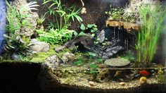 10gal Paludarium with FBT, neons, platies, ghost shrimp, and 5g sump  Like this look!