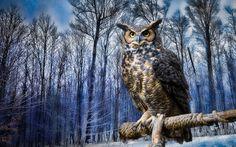 открытки с природой - Поиск в Google