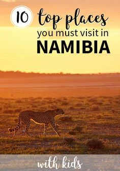 Top 10 places to visit in Namibia with kids - Safari Photography Cool Places To Visit, Places To Travel, Places To Go, Travel With Kids, Family Travel, Family Trips, Travel Pictures, Travel Photos, African Holidays