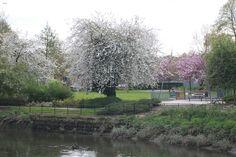 Castle Park Colchester Essex, Castle, Park, Castles, Parks