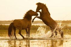 Wild Photo Adventures™ Week 26