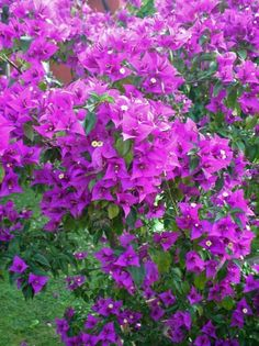 Bonsai, Garden, Flowers, Nature, Beauty, Plant, Garten, Lawn And Garden, Gardens