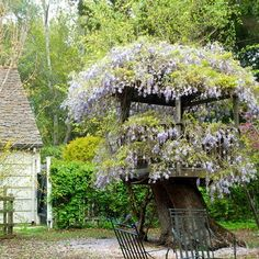 Wisteria Tree House