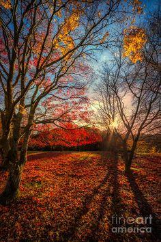 ✯ Autumn Shadows