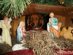 Oops - looks like baby Jesus had an extra party guest!