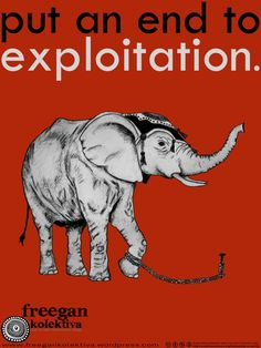Circus/privately owned animals abuse should be punishable by law!!!!