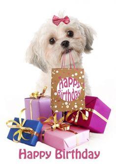 Leuke verjaardagskaart van een hondje, Maltezer Leeuwtje met cadeautjes voor een verjaardag (@Karen van Gerner Fotografie)