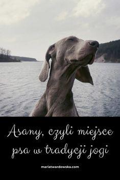 Asana, Dogs, Animals, Animales, Animaux, Animal Memes, Animal, Pet Dogs, Dog