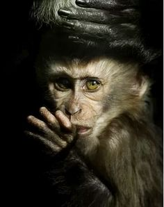 If Christopher Walken were monkey shaped - this is what he'd look like.