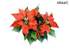 #botanical   #plant   #PSD   #image   #digital   #idea   #illustration   #npine   #iclickar