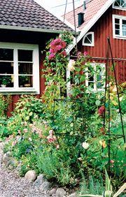 En grönskande torpträdgård - Gård och Torp
