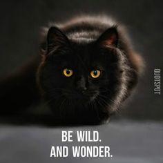 Be wild. And wonder.