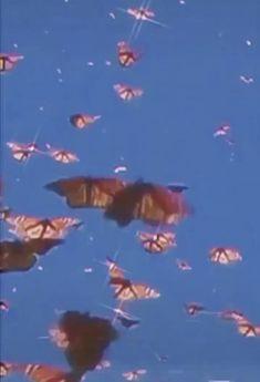 Iphone Wallpaper Video, Butterfly Wallpaper Iphone, Iphone Wallpaper Tumblr Aesthetic, Iphone Background Wallpaper, Retro Wallpaper, Aesthetic Pastel Wallpaper, Aesthetic Backgrounds, Aesthetic Wallpapers, Butterfly Gif