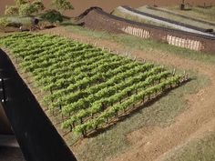 How to Plant an N-scale Vineyard | Model Railroad Hobbyist magazine | Having fun with model trains | Instant access to model railway resources without barriers #modeltrainhowto #modelrailway #modeltrains