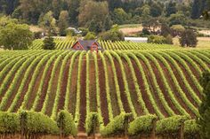 Check out this slideshow Symmetry of a Vineyard in this list Under-the-Radar Wine Country Places To Travel, Places To See, Travel Destinations, Travel Tips, Air Travel, Travel Magazines, In Vino Veritas, Travel Channel, Travel Memories