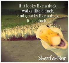 A Like If Quote It Quacks Duck