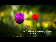 Tratamiento de Merecimiento ~ Louise L. Hay - YouTube