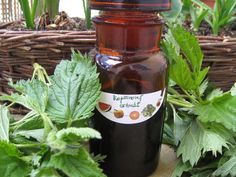 Bylinné extrakty neboli tinktury jsou jedním ze způsobů, jak využít léčivých vlastností bylin a jsou velice účinné. O