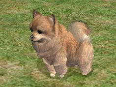 ModTheSims - Pomeranian by Munchies