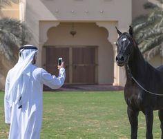 WEBSTA @ hamdanmohammed_fans - 1/2/2017 .... #faz3#fazza#fazza3#fazza#fazzalove#hamdan#HamdanMRM#hamdanbinmohammed#Hamdan_bin_mohammed#hhshmohd#dxd#Dubai#uae#mydubai#princeOfDubai#crownprince#Almaktoum
