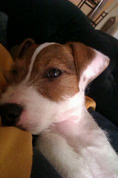 Dog Walkers - Balham SW12(www.harrisons-dogs.co.uk)