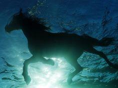 Les fonds d'écran - Un cheval qui nage