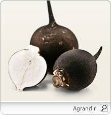 Radis noir (Raphanus sativus var niger), indications, posologie, recherches, précautions, interactions.