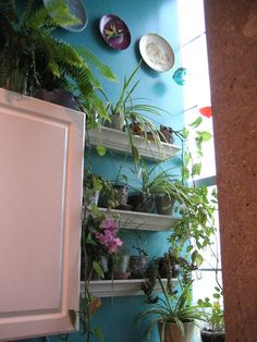 Should i grow a green thumb?? Indoor gardening? Real life problems.
