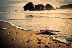 #summer #sea #seastar #photography